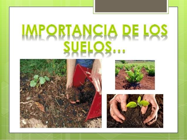 importancia de los suelos