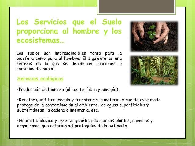 Importancia de los suelos for Importancia de los suelos