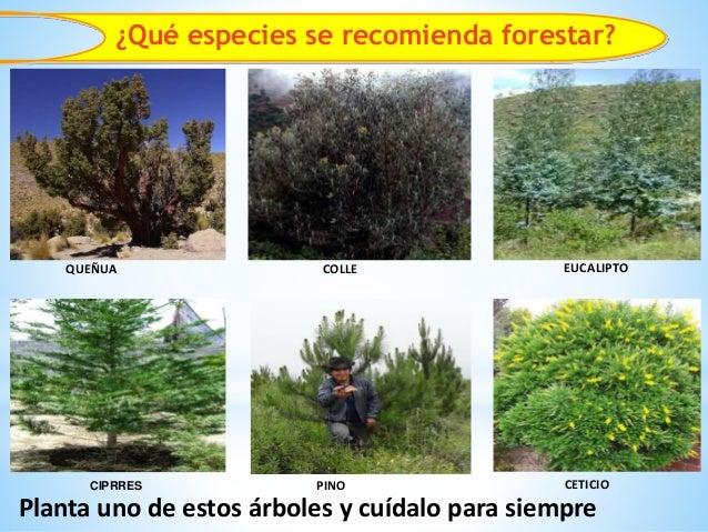Importancia forestal erosi n de suelos infiltraci n de agua for Importancia de los viveros forestales