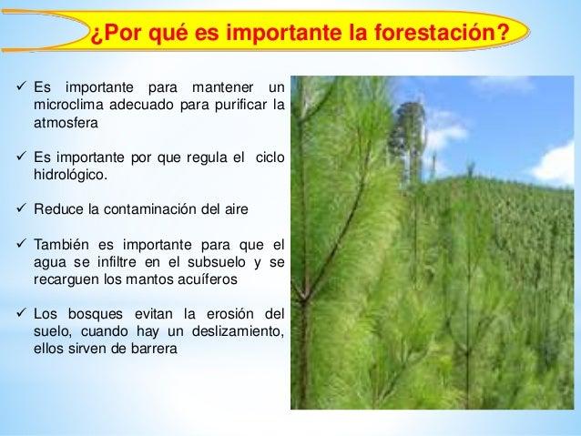importancia forestal erosi n de suelos infiltraci n de agua