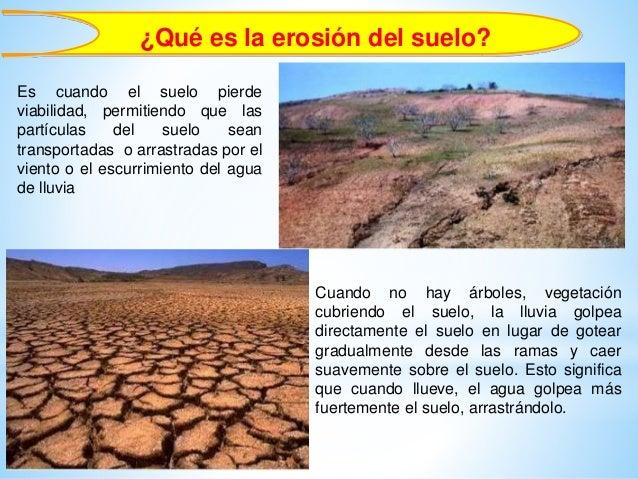 Importancia forestal erosi n de suelos infiltraci n de agua for Clausula suelo desde cuando se aplica