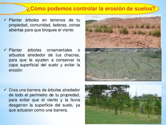 Importancia forestal erosi n de suelos infiltraci n de agua for Importancia de los suelos