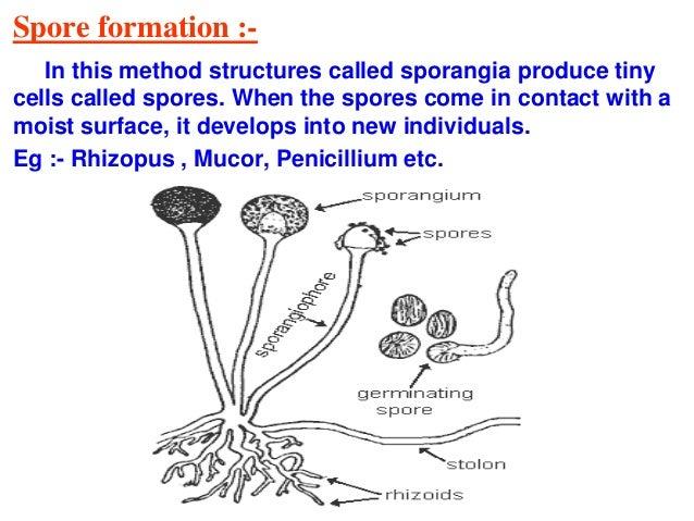 Important Diagrams In Biologyppt