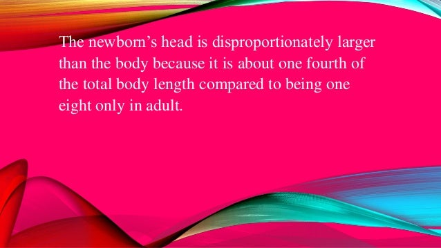 The newborn's head is disproportionately larger than the body because it is about one fourth of the total body length comp...