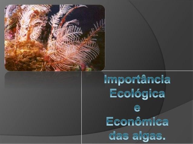  Algumas algas que vivem no meio aquático servem de alimento para microorganismos heterótrofos além de serem responsáveis...