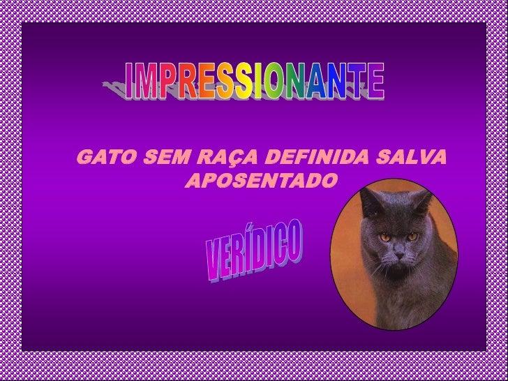 GATO SEM RAÇA DEFINIDA SALVA         APOSENTADO