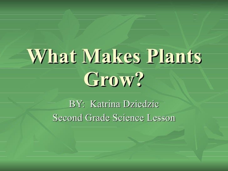 What Makes Plants Grow? BY:  Katrina Dziedzic Second Grade Science Lesson