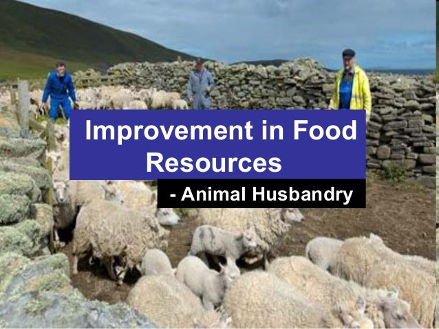 improvement in food resources Also recommended for you biology improvement in food resources part 3 - improvement in food resources, class 9, science video | 12:02 min biology improvement in food resources part 2 - improvement in food resources, class 9, science.