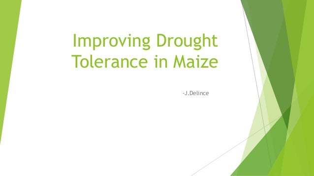 Improving Drought Tolerance in Maize -J.Delince