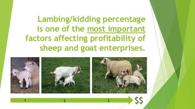 Goat Kidding Definition
