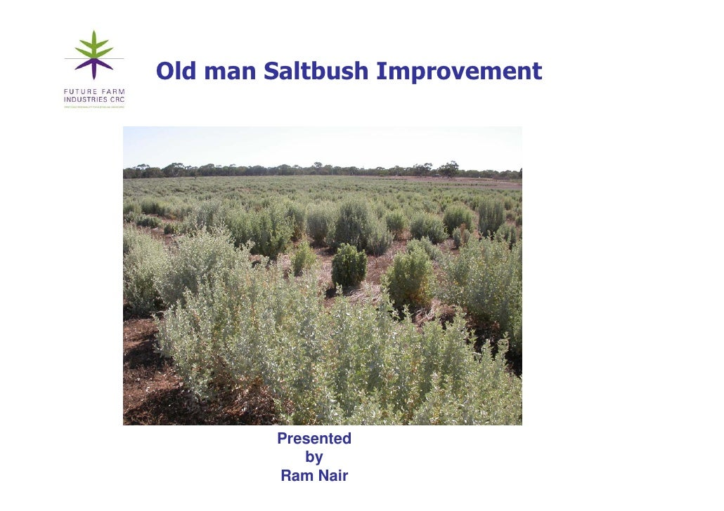 Old man Saltbush Improvement                    p             Presented            by         Ram Nair