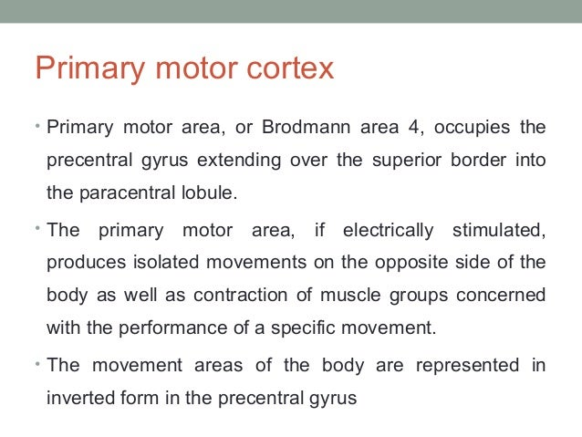 Supplementary motor area • Input: Cingulate gyrus, Thalamus, sensory & prefrontal  cortex • Output: Premotor, primary moto...