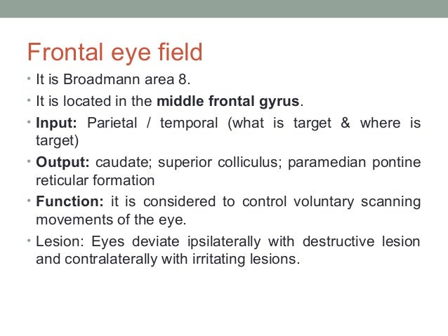 Vascular supply • Medial parts of frontal lobe: Anterior cerebral artery • Convexity and deep regions: Superior (rolandic)...