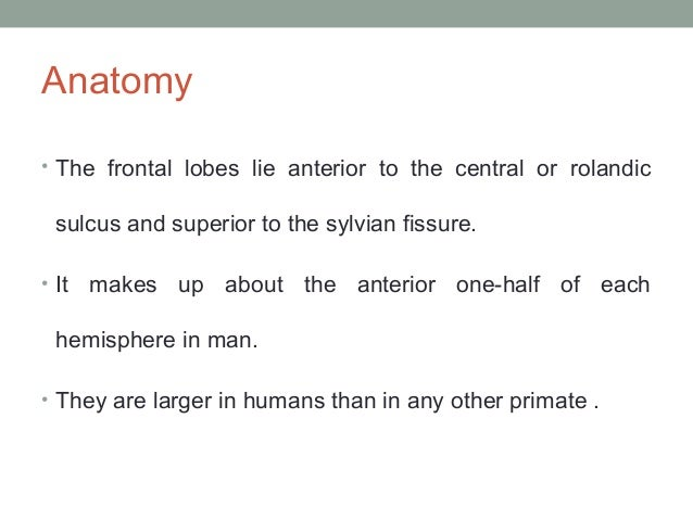 Anatomy • The frontal lobes lie anterior to the central or rolandic  sulcus and superior to the sylvian fissure. • It  mak...