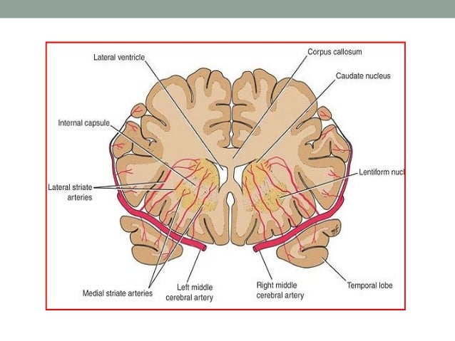 FSC: Orbito-frontal circuit Infero-lateral prefrontal Orbito-frontal  • This  VM Caudate  DM Globus Pallidus Substantia Ni...