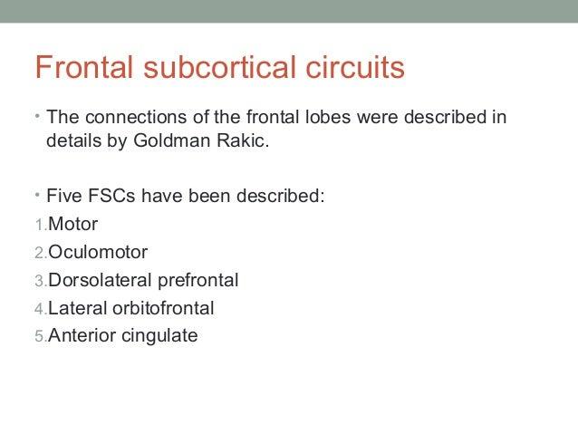 FSC: Anterior Cingulate Circuit Anterior Cingulate Gyrus  Ventral Striatum  RL Globus Pallidus Substantia Nigra  • This ci...