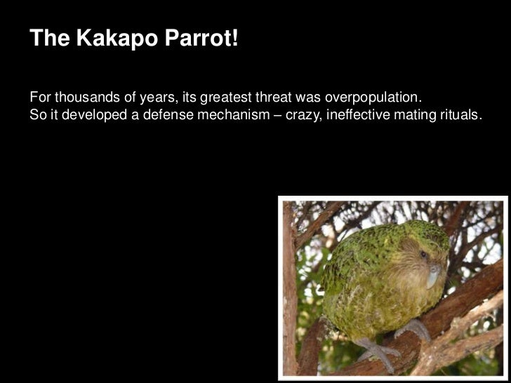 The Kakapo Parrot!When if finally faced predators after man arrived,it did the same thing that always saved it in the past...