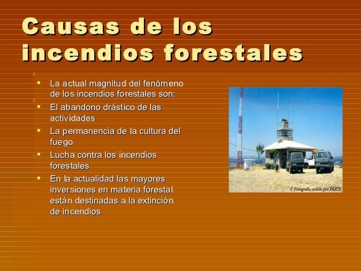 Incendios forestales for Importancia de los viveros forestales