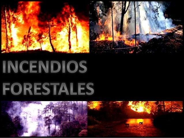 Incendios forestales y deforestacion for Importancia de los viveros forestales