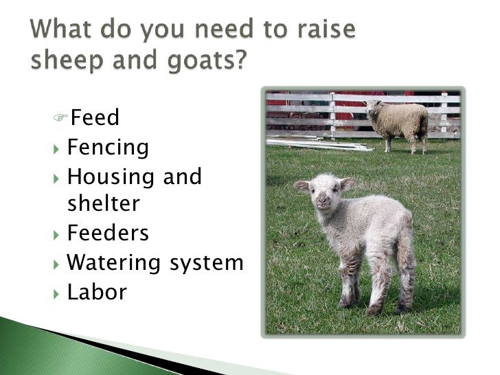 Income opportunities with sheep and goats