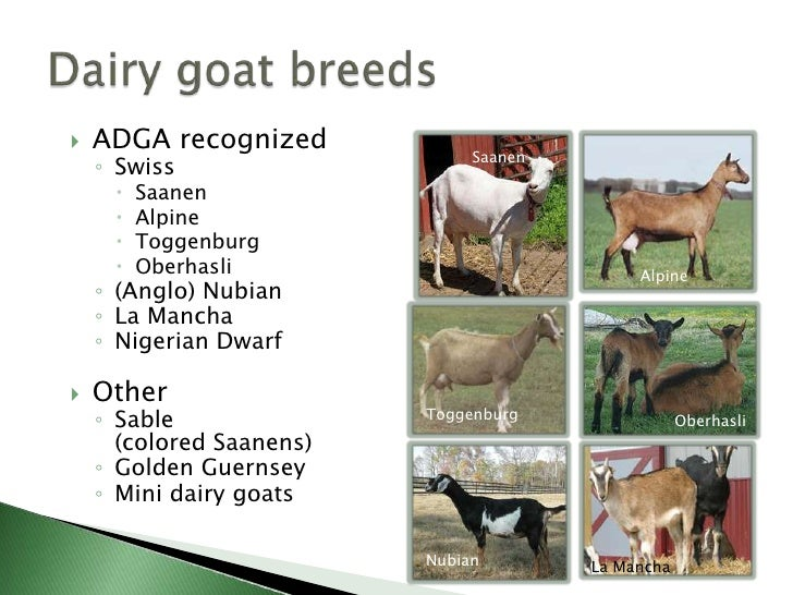 goat breeding business plan