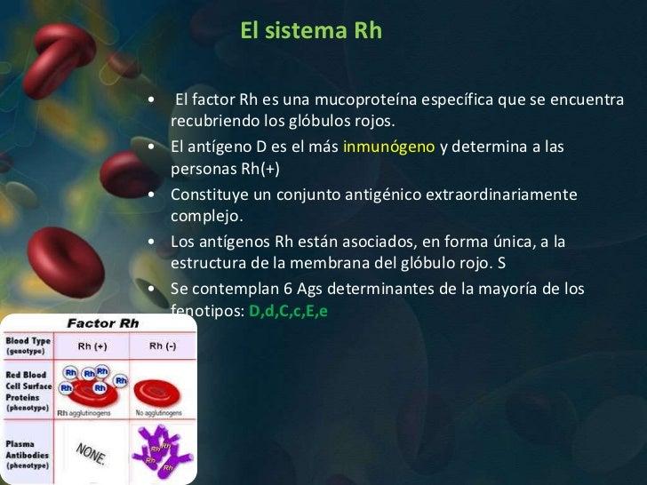 El sistema Rh•    El factor Rh es una mucoproteína específica que se encuentra    recubriendo los glóbulos rojos.•   El an...