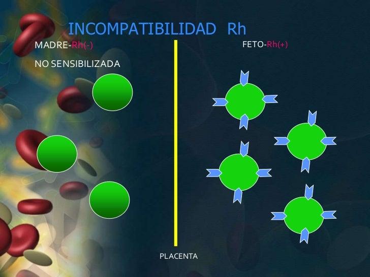 INCOMPATIBILIDAD RhMADRE-Rh(-)                   FETO-Rh(+)NO SENSIBILIZADA                   PLACENTA