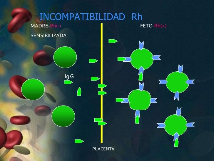 INCOMPATIBILIDAD RhMADRE-Rh(-)                     FETO-Rh(+)SENSIBILIZADA              Ig G                     PLACENTA