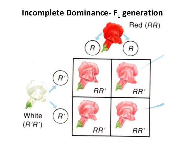 Incomplete Codominance Multiple Alleles