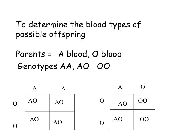 Pictures Codominance Worksheet Blood Types Answers - Toribeedesign