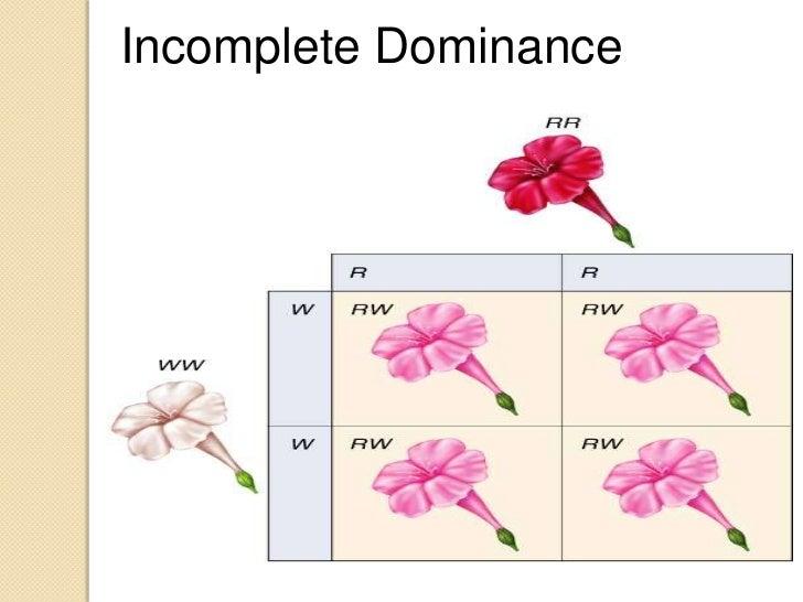 incomplete-dominance-5-728.jpg?cb=1327312296