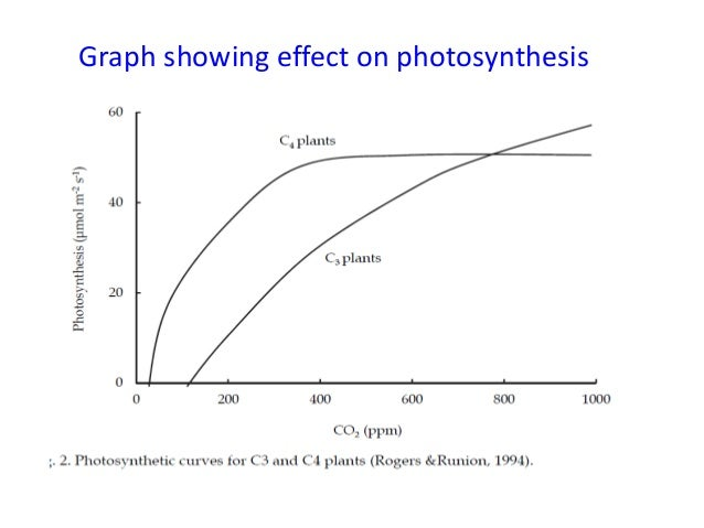 photosynthesis graph