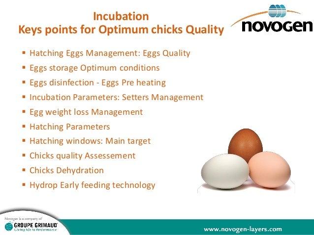 Egg Incubation  Slide 3