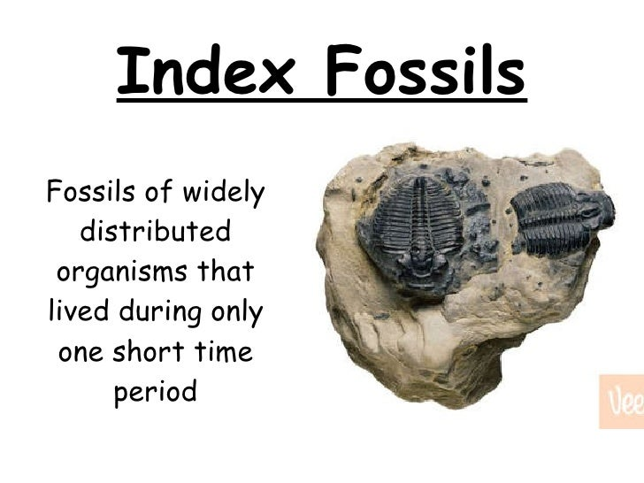 Importance of dating fossils