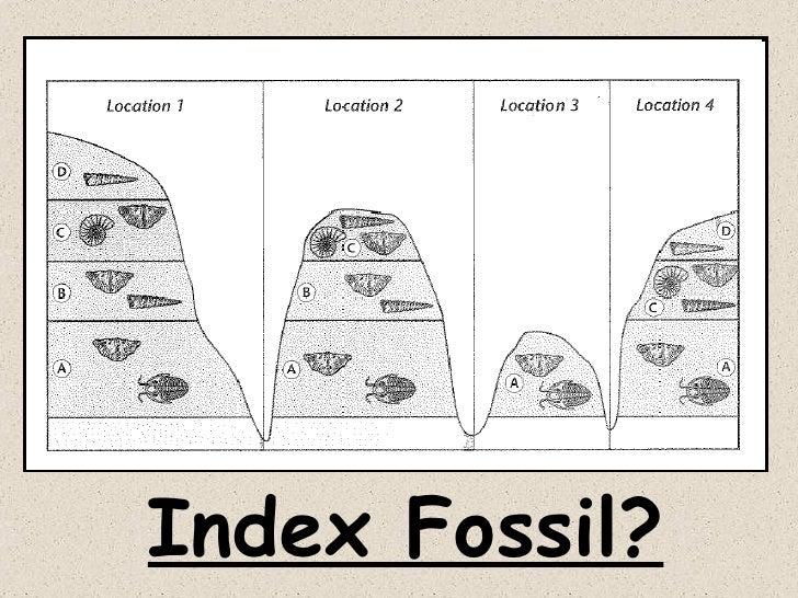 Does relative dating use index fossils peelingnosochkisosoru – Index Fossils Worksheet