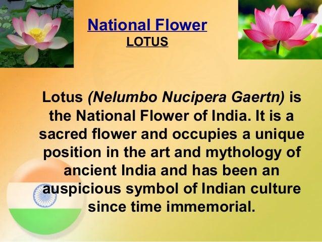 essay on national flower