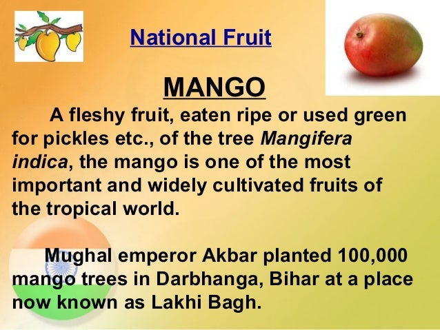 mango fruit essay short