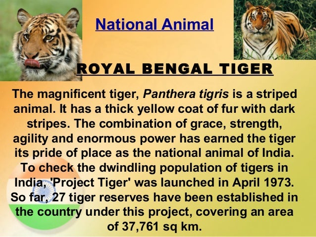 Tiger our national animal essay
