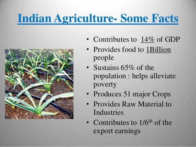 indian agricultural scenario since independence