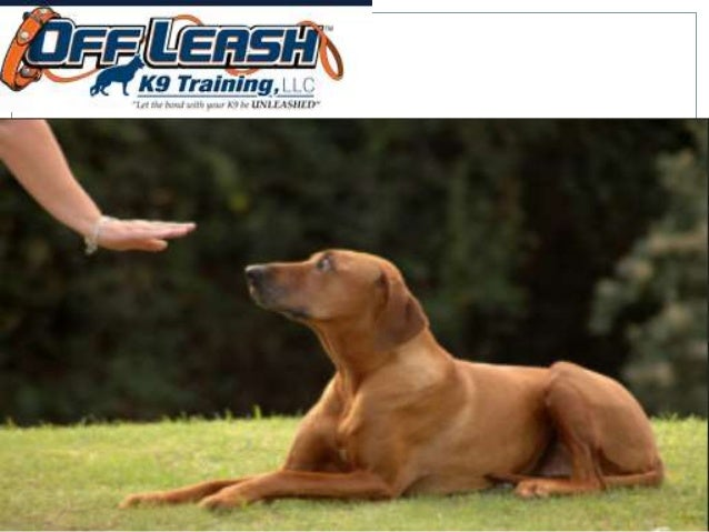 WE OFFER PAYMENT PLANS ON ALL PROGRAMS! Basic Obedience Starter Package: One individual lesson is $299.00 (This includes t...