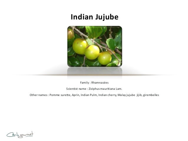 Indian Jujube                                     Family : Rhamnacées                           Scientist name : Ziziphus ...