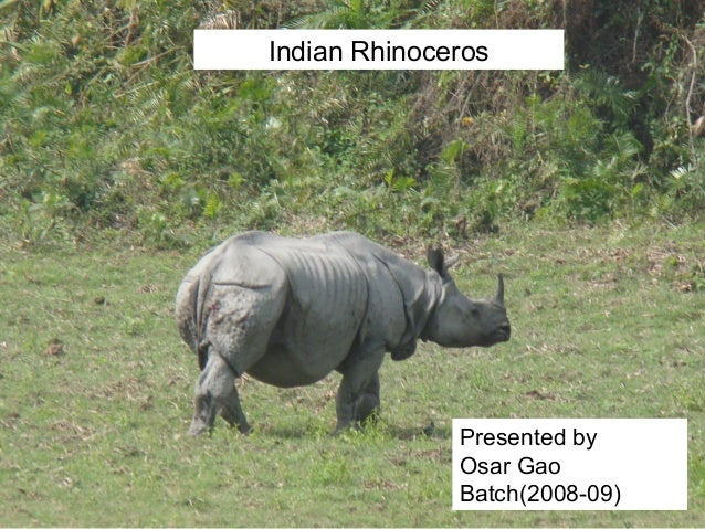 Indian Rhinoceros Presented by Osar Gao Batch(2008-09)