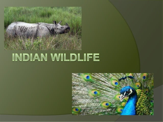           The wildlife in India comprises a mix of species of different types of organisms. Apart from a handful of...