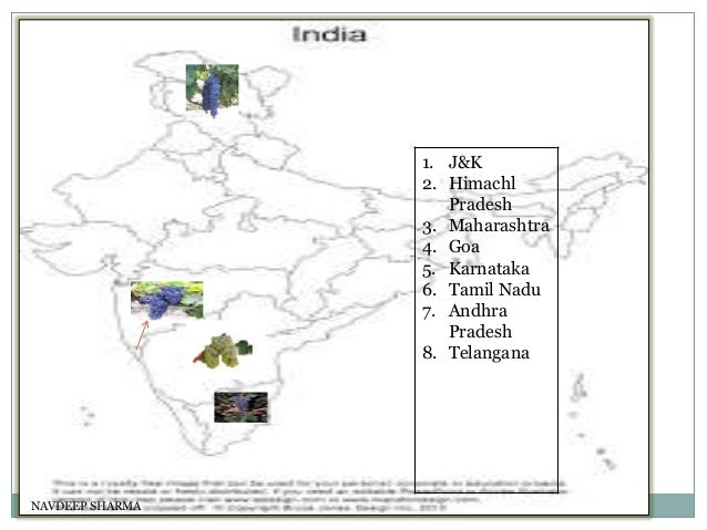 Indian wine Slide 3