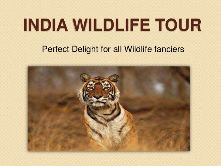 INDIA WILDLIFE TOUR  Perfect Delight for all Wildlife fanciers