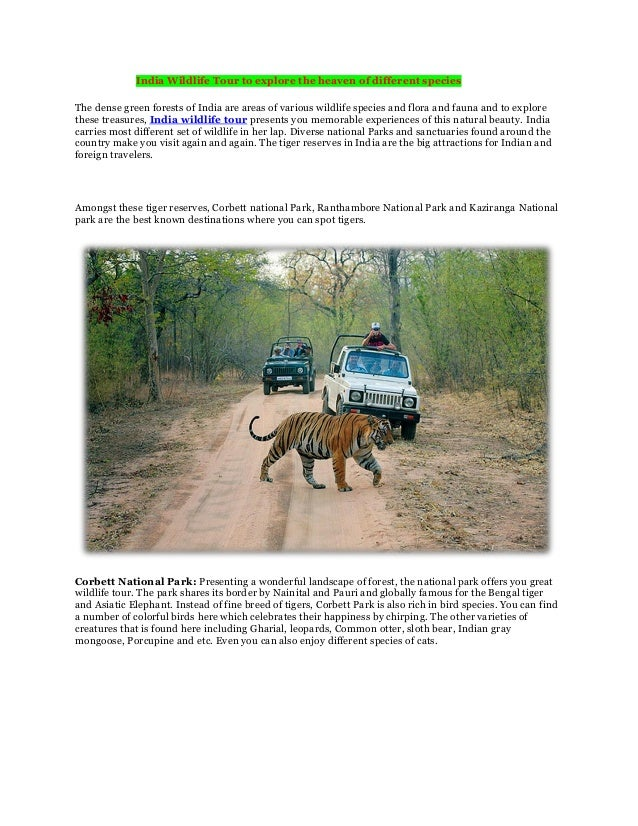 India Wildlife Tour to explore the heaven of different speciesThe dense green forests of India are areas of various wildli...