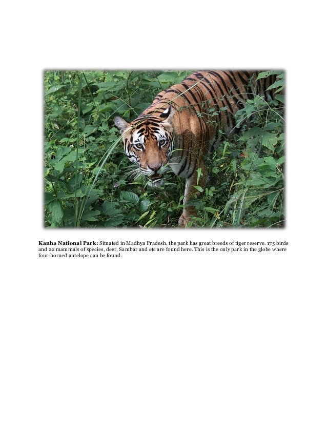 Kanha National Park: Situated in Madhya Pradesh, the park has great breeds of tiger reserve. 175 birdsand 22 mammals of sp...