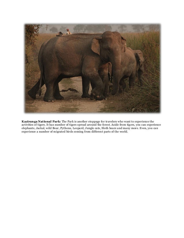 Kaziranga National Park: The Park is another stoppage for travelers who want to experience theactivities of tigers. It has...