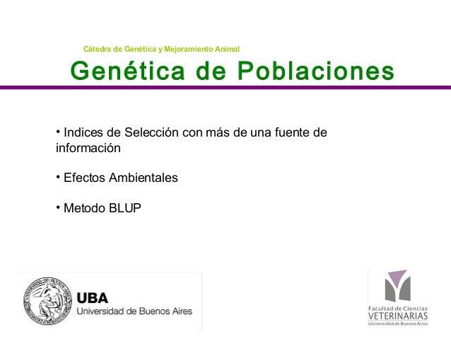 Genética de Poblaciones Cátedra de Genética y Mejoramiento Animal • Indices de Selección con más de una fuente de informac...