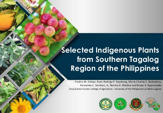 Da bar selected indigenous plants from southern tagalog for Bureau tagalog